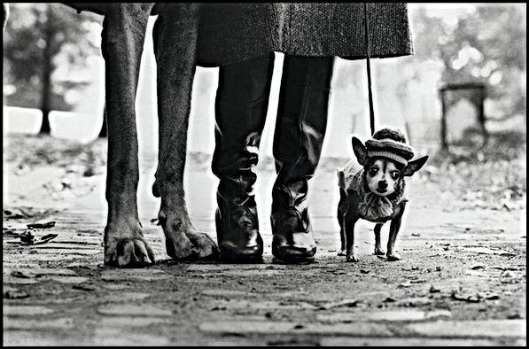 Elliot Erwitt fotografo cani