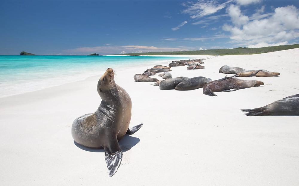 Isole Galapagos viaggio america latina