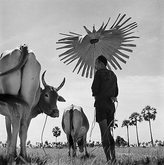 Don McCullin fotografo guerra