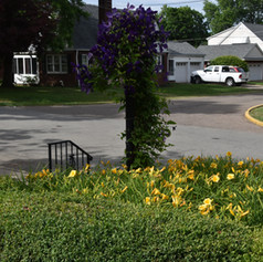 A field of flowers greets you before you even reach the front door!