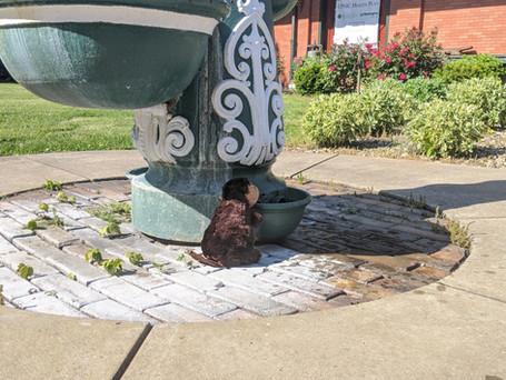 Week 5: Historic Fountain near the Beaver Heritage Foundation