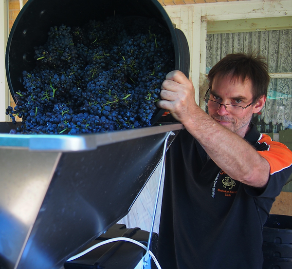 hand selected Cabernet Sauvignon grapes into the crusher...