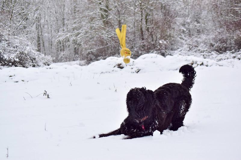 terrier noir russie.jpg