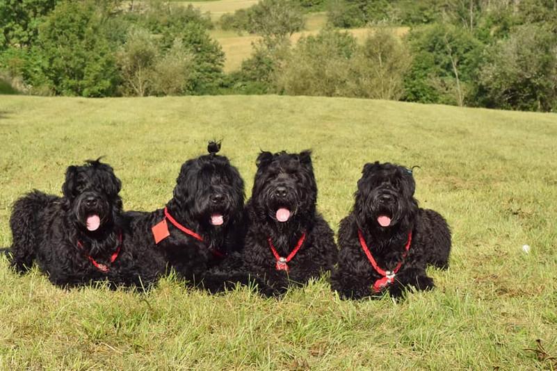 black russian terrier kennel.jpg