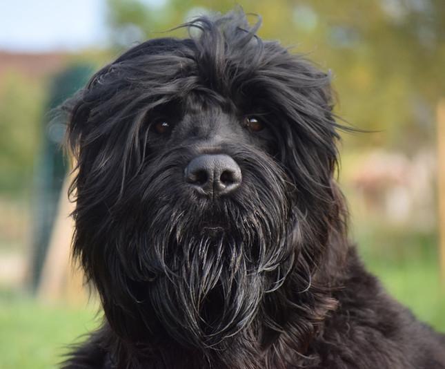 kennel black russian terrier - Copie.jpg