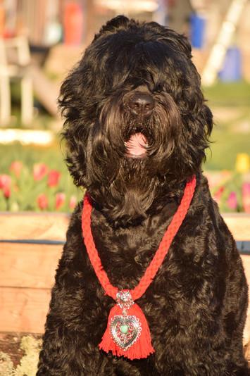 tchorny terrier - Copie.jpg