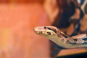 Snake Fencing Santa Clarita, Madera, Palm Springs