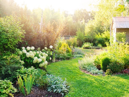 The Power of Plants to Beautify your Home and Fortify your Soul!