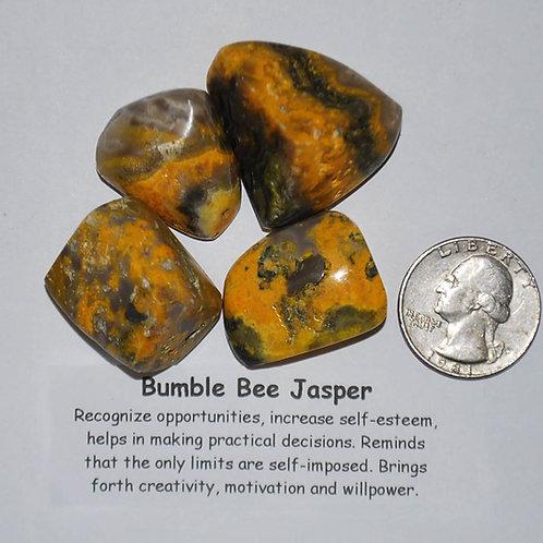 Jasper - Bumble Bee