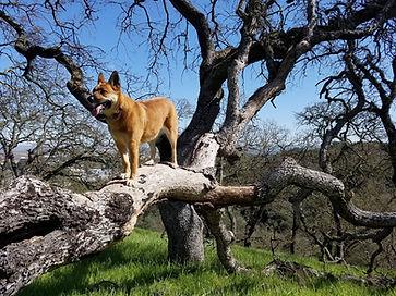 Geroge tree.jpg