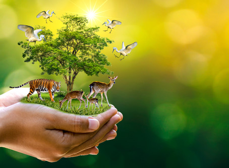 How to do Your Part in Animal Conservation