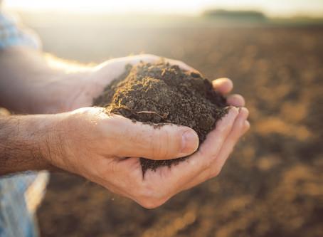 Understanding Different Soil Types