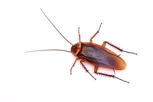 Northridge CockroachExterminatingService