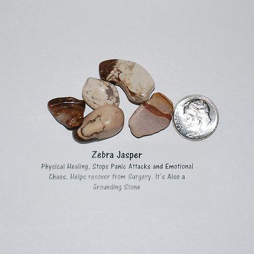 Jasper - Zebra