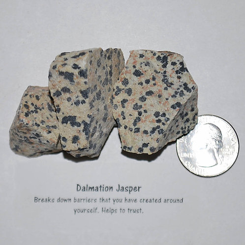 Jasper - Dalmation Rough