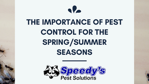 The Importance of Spring/Summer Pest Control Maintenance