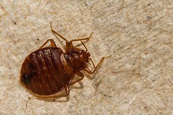 Bed Bug Service Northridge, Fresno, Palm Springs