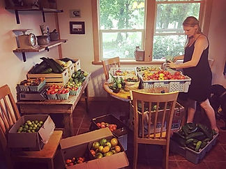 So. Many. Tomatoes. Organizing our tomat