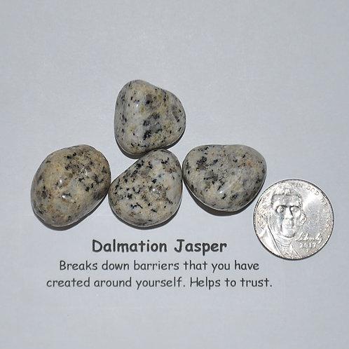 Jasper - Dalmation