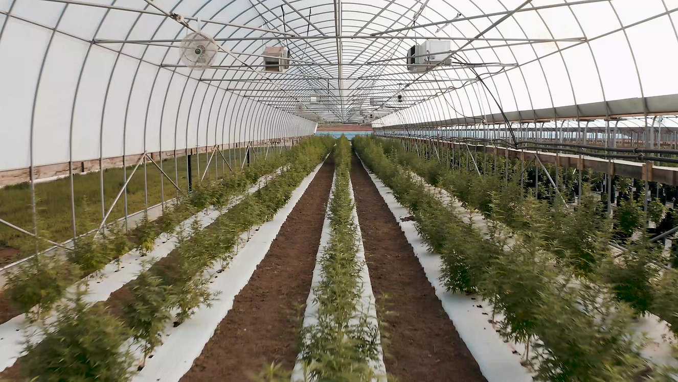 Sustainable CBD Farm