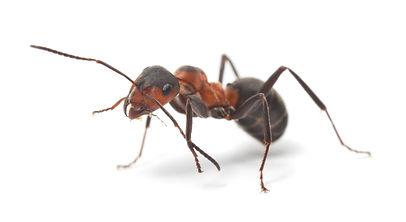 Palm Springs Ant Exterminator
