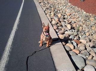 george puppy stay-0001.jpg
