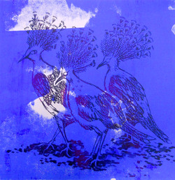 Three Victoria Crowned Pigeons (Goura victoria)