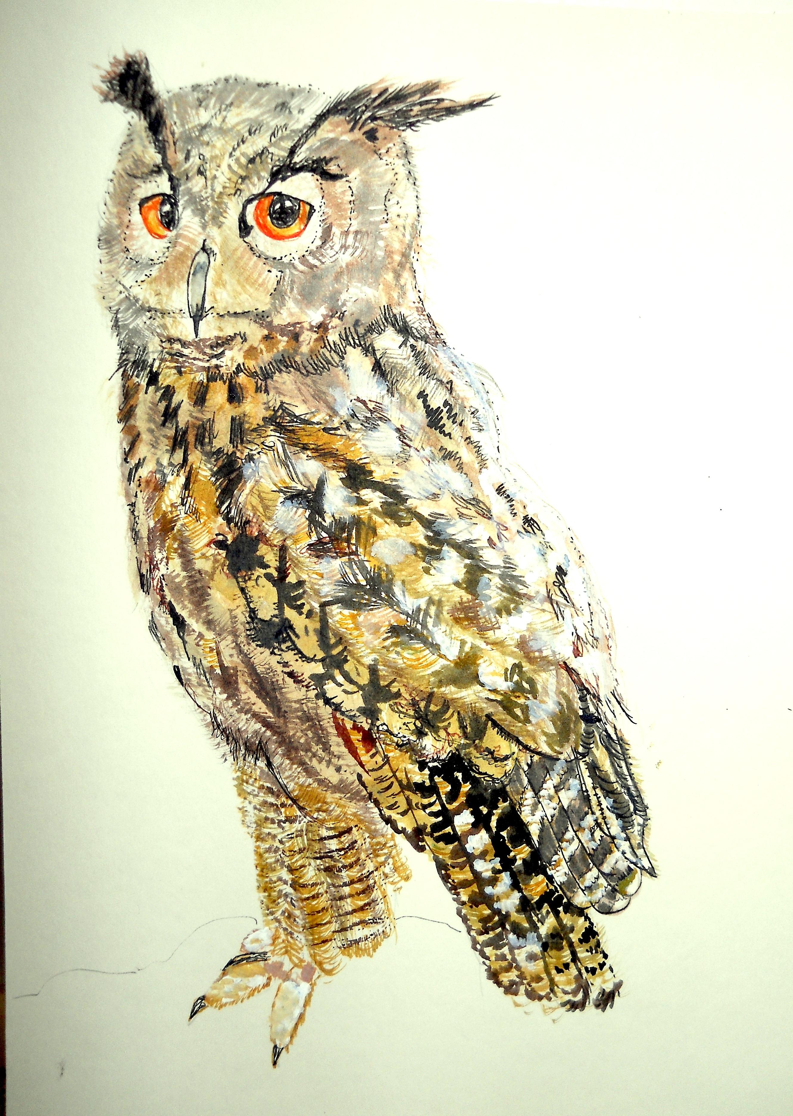 Turkmenian Eagle Owl (Bubo bubo)