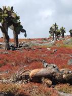 Vegetation Seymour Island.jpg