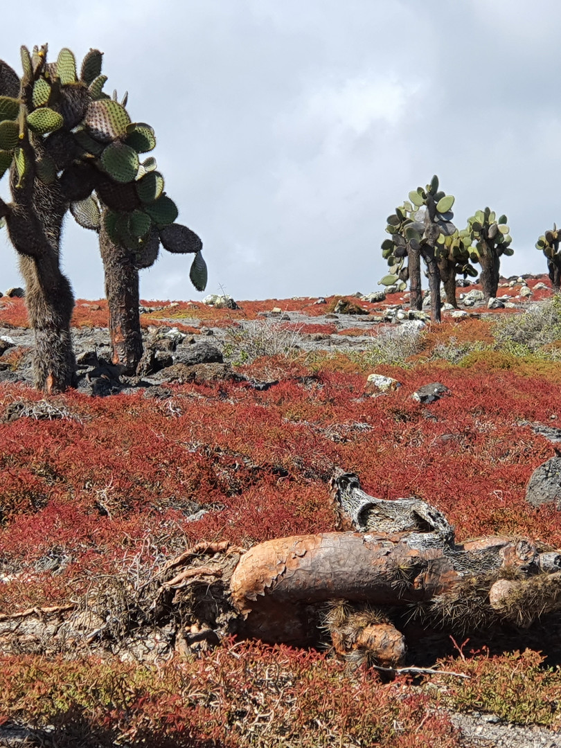 Vegetation Seymour Island.jpg