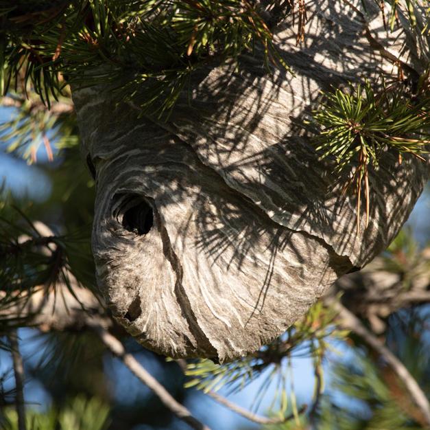 beehive soldier creek (2 of 2).jpg