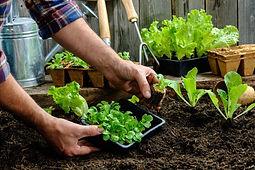 volunteer gardening.jpg