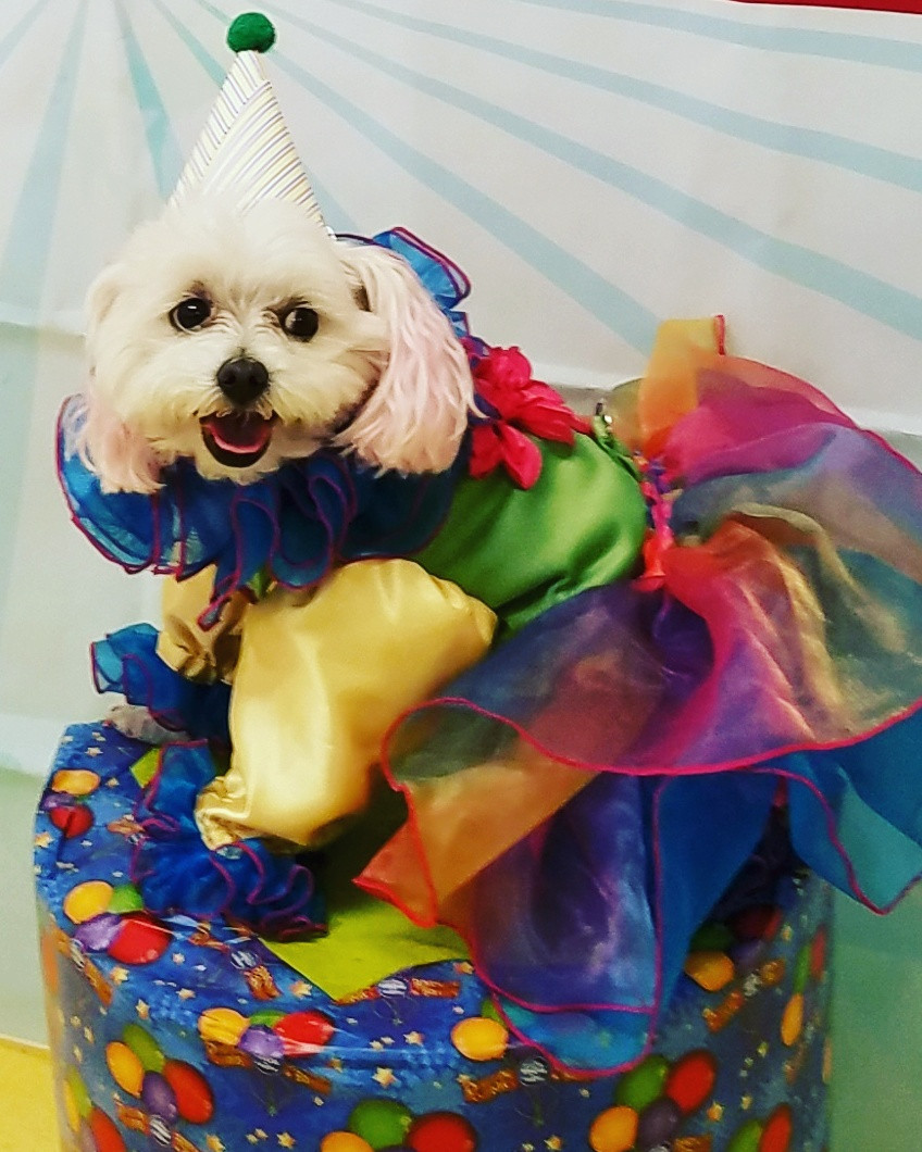 Clown Costume by Sew Dog Gone Creative  Click on picture