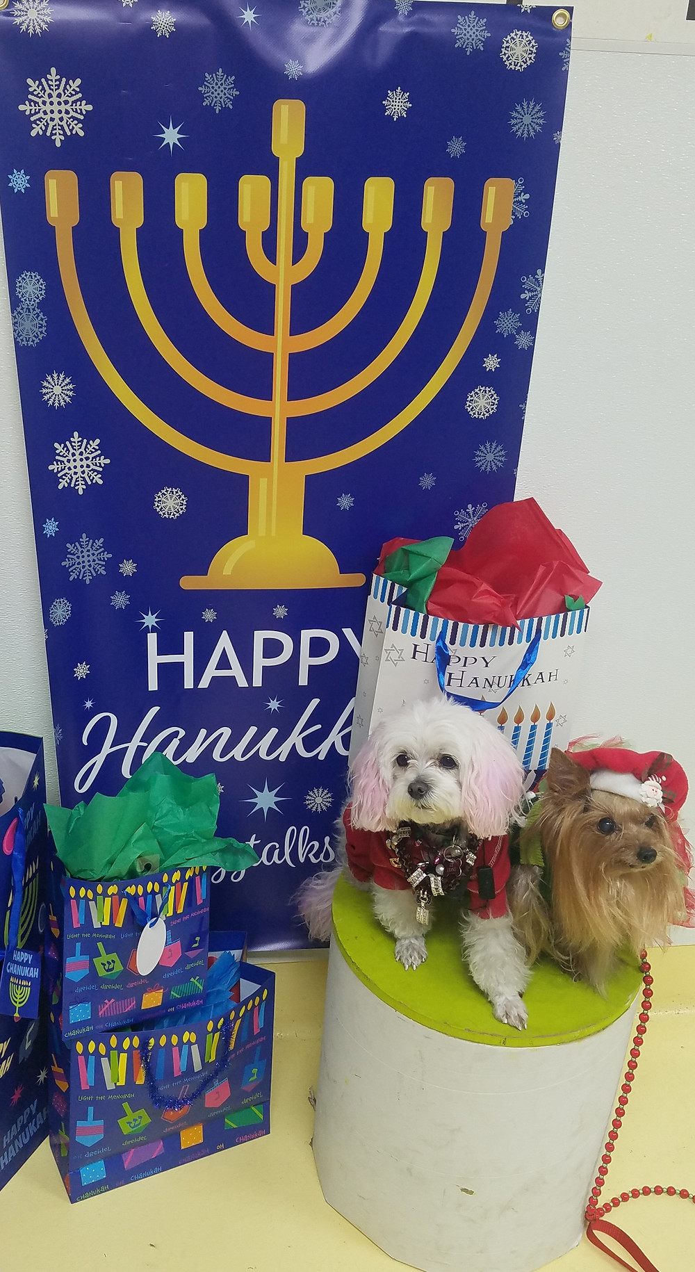 My Hanukkah Photo Op