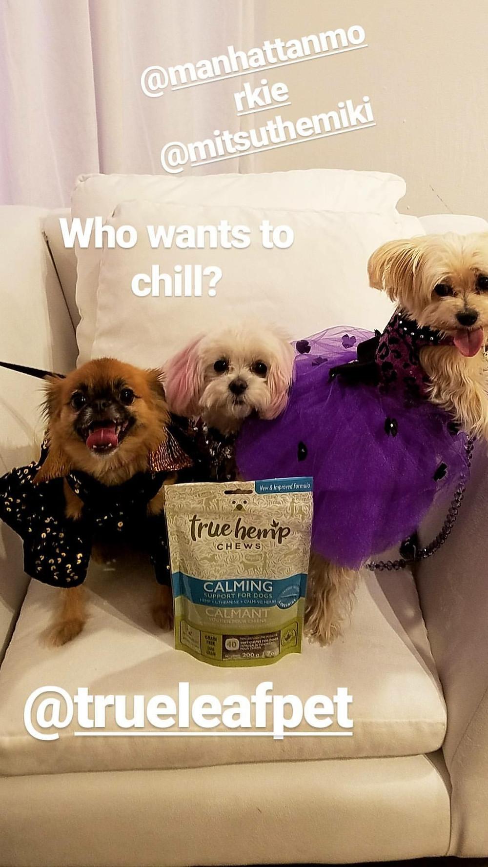 NYC Dog Fashionistas