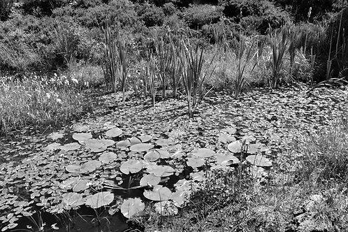 Cloonshanville Bog Pond