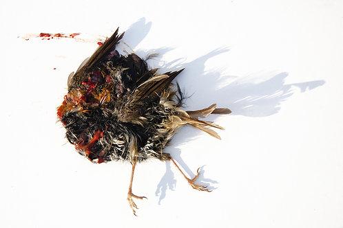 Dead Bird Print