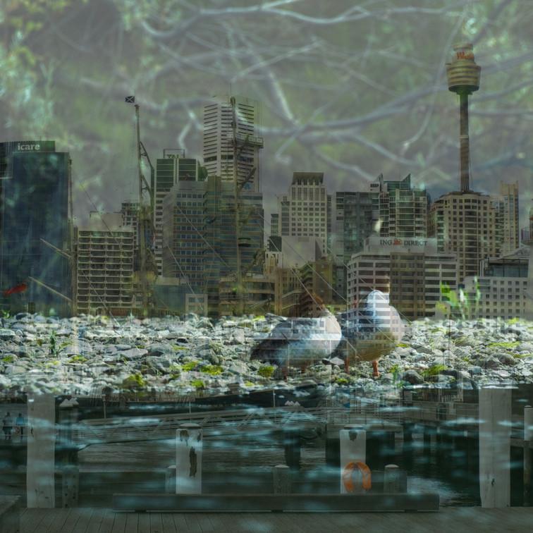 Ducks over Sidney