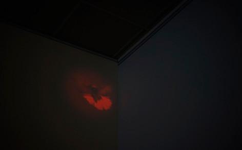 PIGEON VOL(E) / Natalia de Mello / video installation