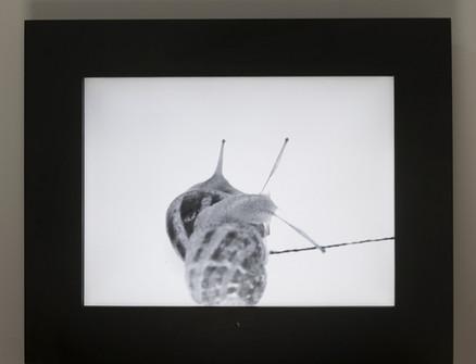video on frame