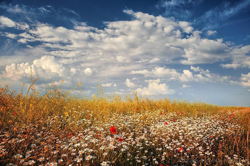 Pipacsos felhők | Pásztor András