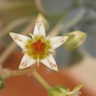 flores 30.jpg