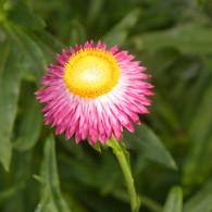 flores 17.jpg