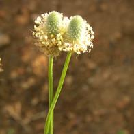 flores 24.jpg