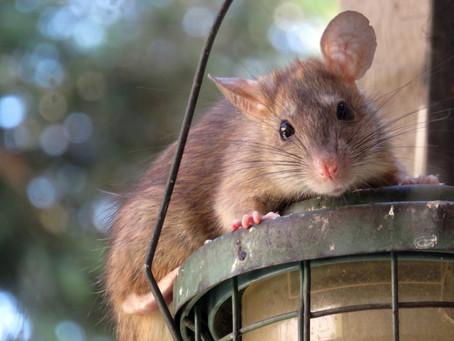 Remedia feng shui na 2020 rok Metalowego Szczura