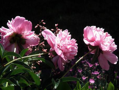 Kwiaty w Feng - Shui