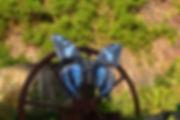 Blue Wings Usine caverne des hirondelles  Île de la Réunion Reunion Island canettes upcycling art cans
