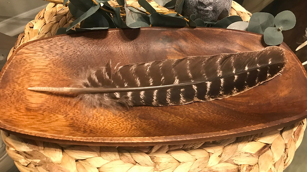grade a barred turkey smudging feather