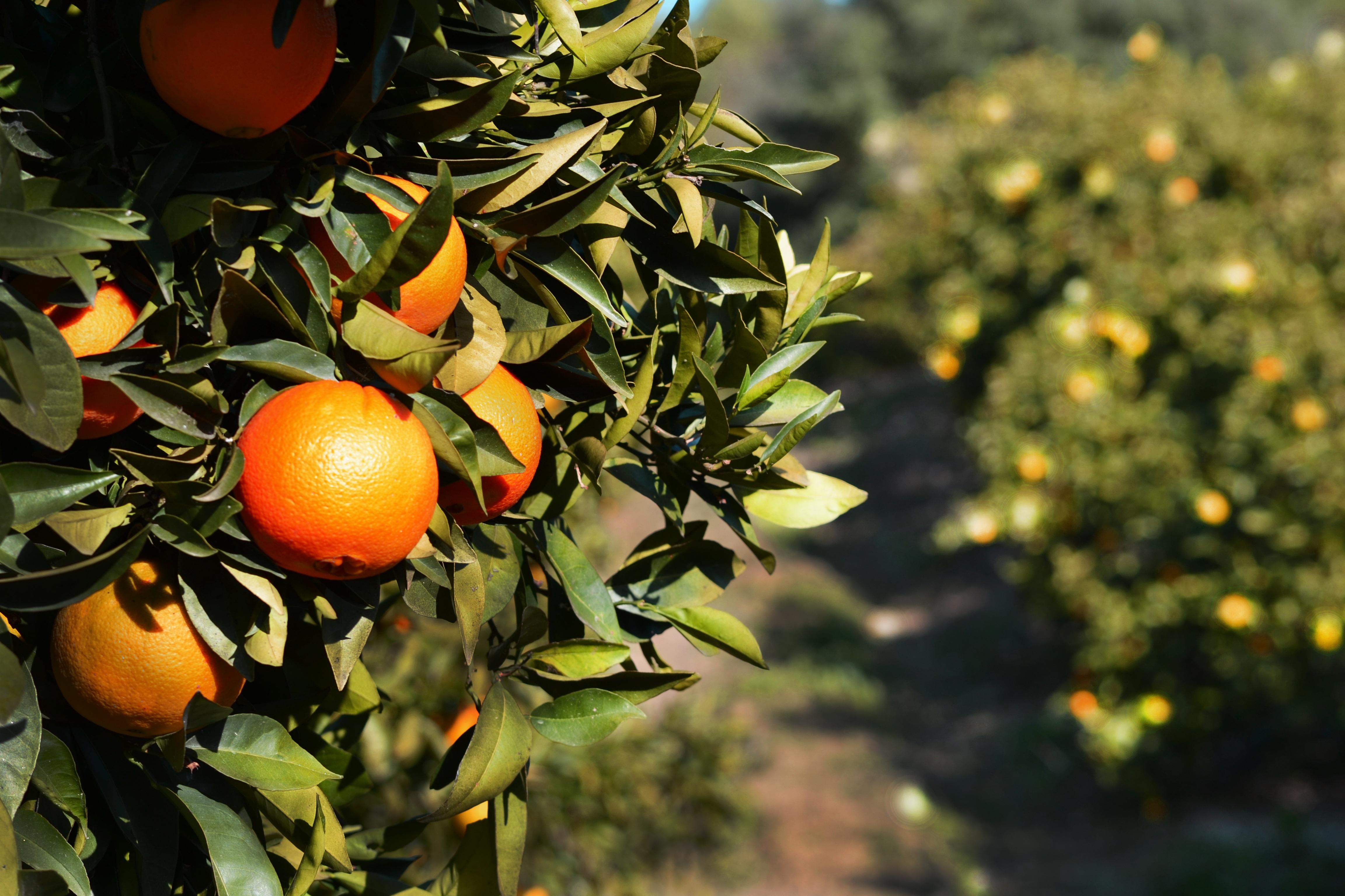 orange-1099328.jpg