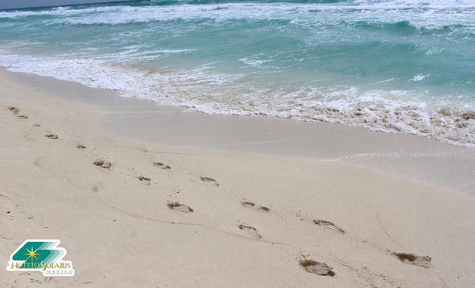 ¿De qué está compuesta la arena de las Playas de Cancún?